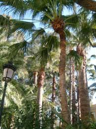 Palms at Archenna