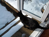 The cat still isn't keen to go out - cold on the paws!