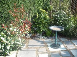 My lovely sunny and tidy garden!