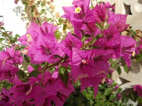 Spain - flowers