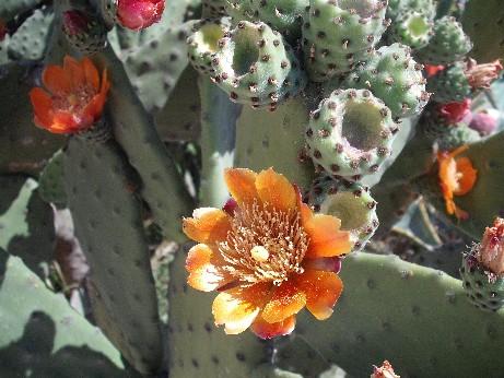 Spain cactus 3