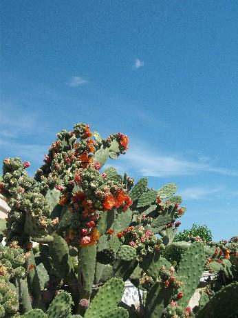 Spain cactus 4