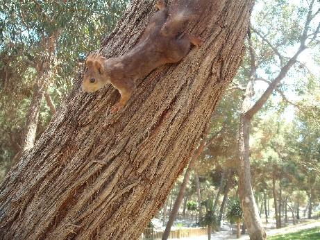 Spain squirrel 2