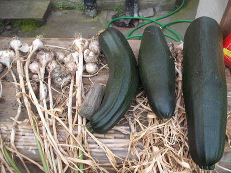 Ben's courgettes