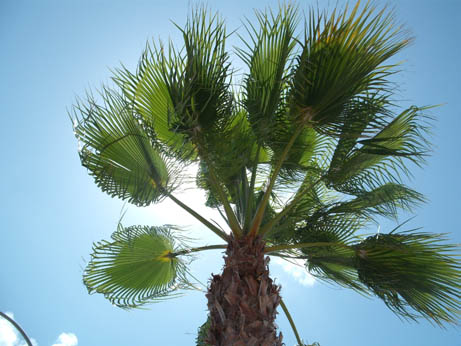 Spain - palm tree