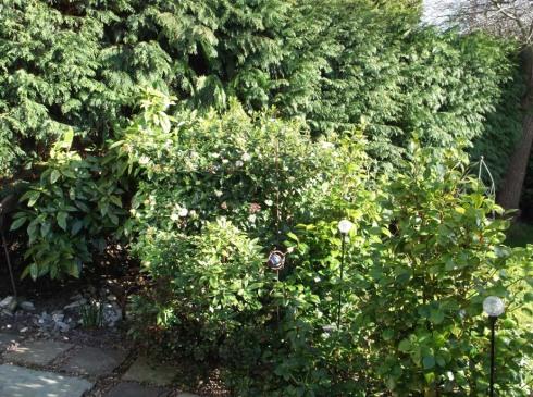 Garden March 1