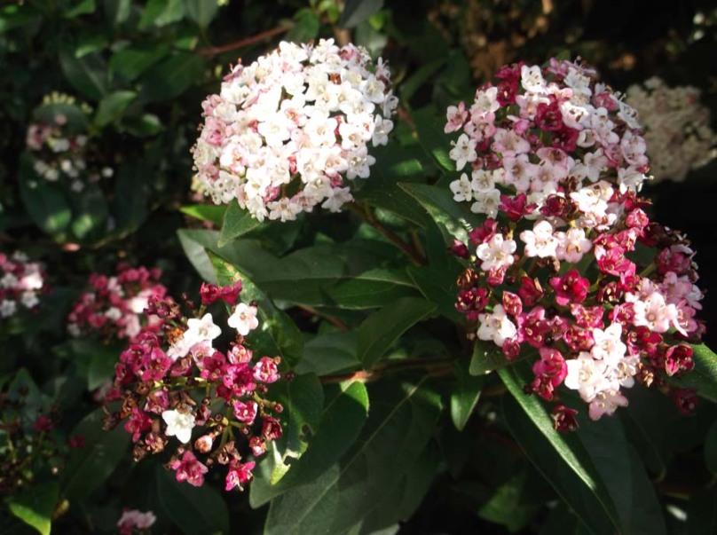Garden March 2