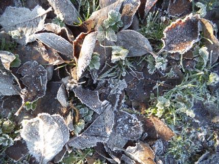 Dec-winter walk 3