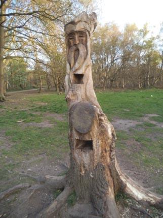 Sherwood trees