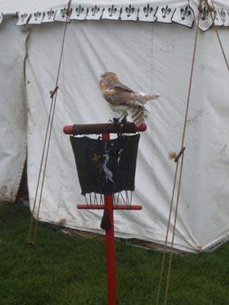Tutbury small owl 1