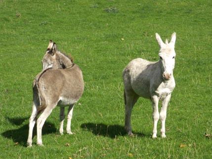 Sept walk 3 -donkeys