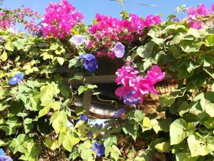 Spain Nov flowers 2
