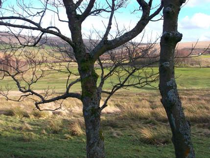Marsden Walk Feb 5