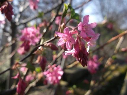 Spring walk March