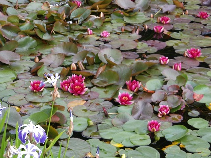 NT Holiday June 2014 - Knightshayes garden 6