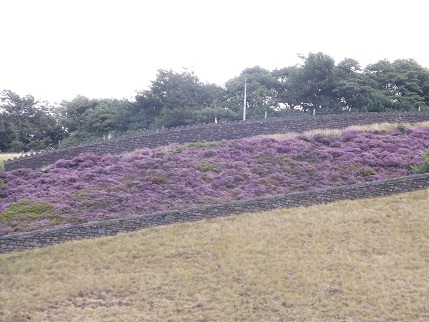 Marsden heather 5