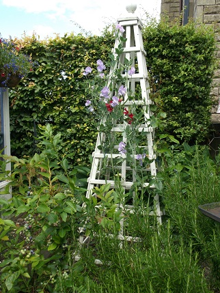 Marsden Open gardens 17
