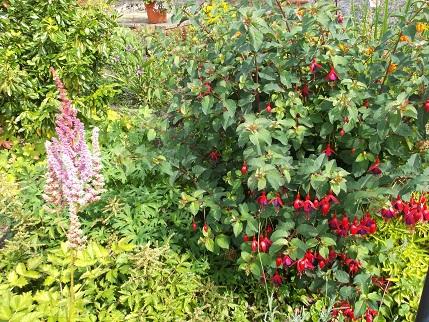 Marsden Open gardens 19