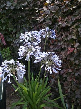 Marsden Open gardens 20
