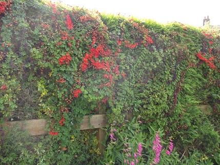 Marsden Open gardens 21