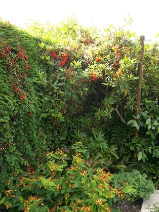 Marsden Open gardens 22