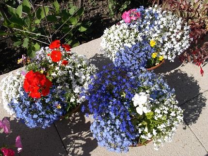 Marsden Open gardens 23