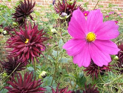 Hampton Court 7-gardens