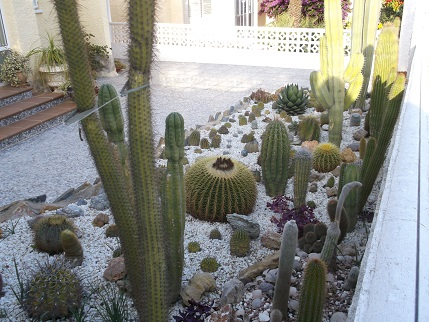 Spain New Year Cactus garden