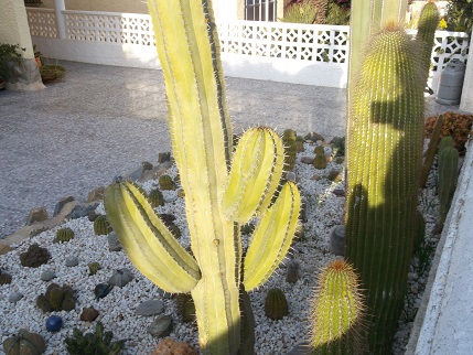 Spain New Year Cactus garden 2