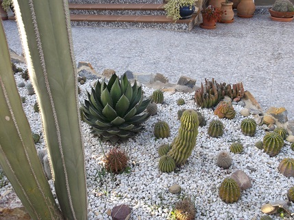 Spain New Year Cactus garden 3