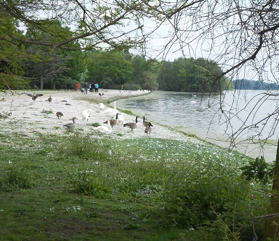 Clumber lake 4