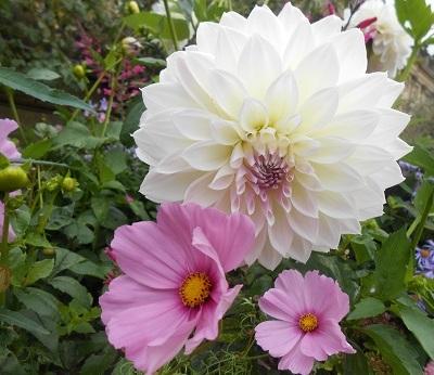 Harewood flowers 1