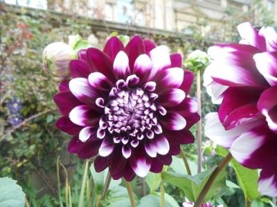 Harewood flowers 2