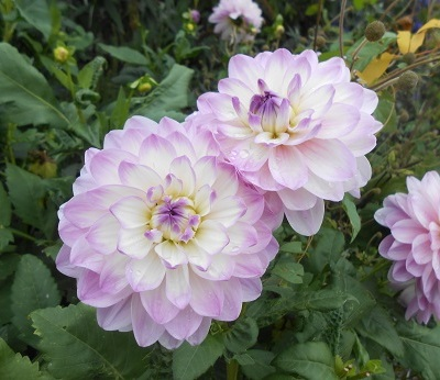 Harewood flowers 3
