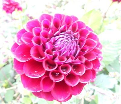 Harewood flowers 4