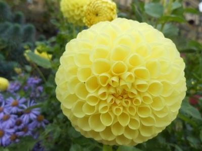Harewood flowers 5