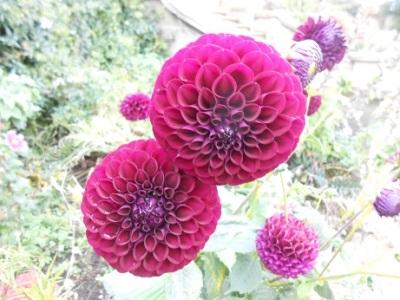 Harewood flowers 6