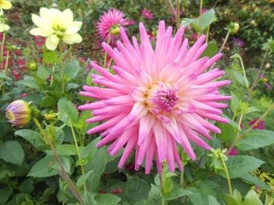 Harewood flowers 7