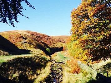 Marden Autumn 1