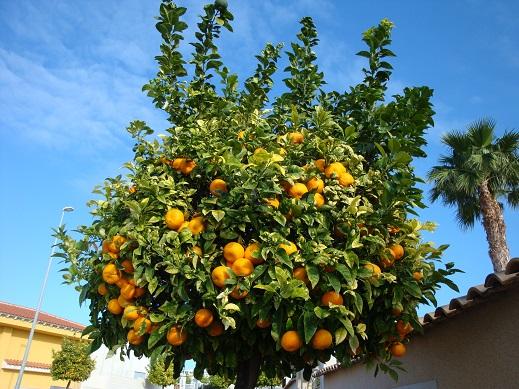 Spain planting 1