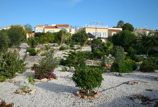 Spain planting 5