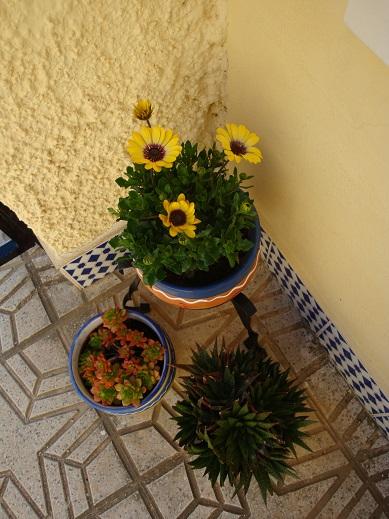 Spain terrace 4