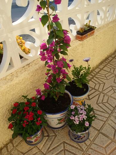Spain terrace 6