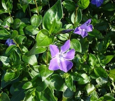 April flowers 1