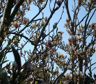 April flowers 10