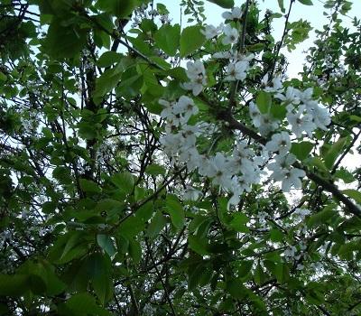 April flowers 5