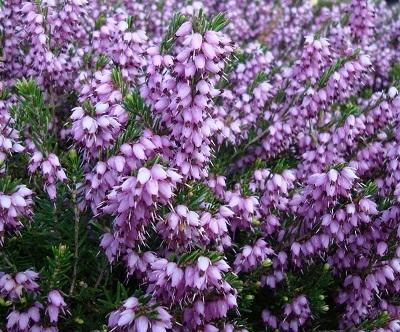 April flowers 6