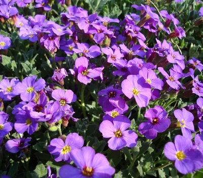 April flowers 7