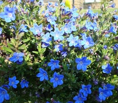 April flowers 8