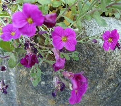 April flowers 9